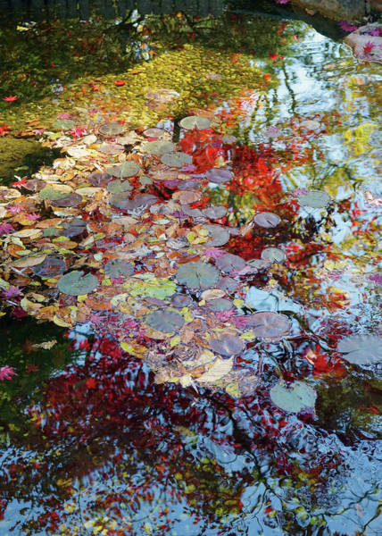 Photograph - Hillwood Reflections by David Posey