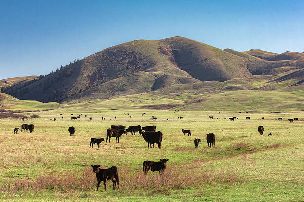 Photograph - Hilly Herd by Todd Klassy