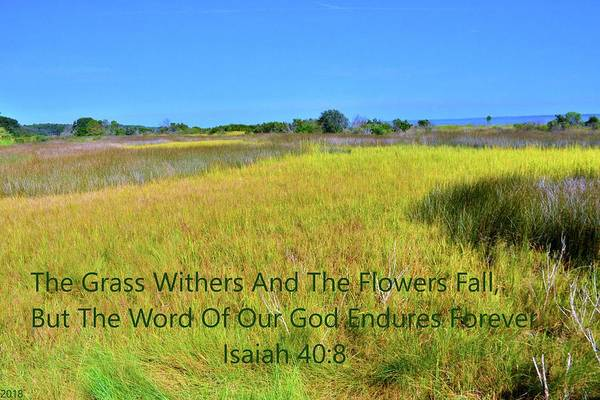 Photograph - Hilton Head South Carolina Marshland Isaiah 40 8 by Lisa Wooten