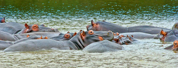 Wall Art - Photograph - Hippo Bath by Albert Photo