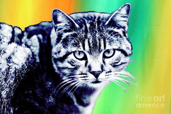Cool Cat Digital Art - Hipster Cat From Istanbul Pop Art by John Rizzuto