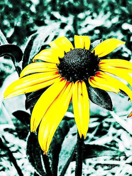 Photograph - His Garden Through Her Eyes 3 by Jacqueline McReynolds