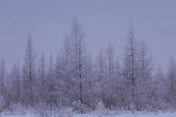 Photograph - Hoar Frost Sax Zim Bog by Paul Schultz