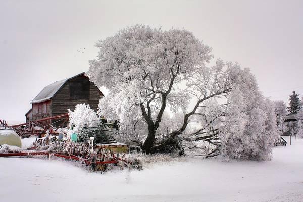 Photograph - Hoar Frost Yard by David Matthews