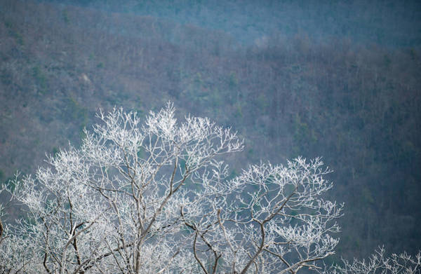 Photograph - Hoarfrost Collects On Branches by Mark Duehmig