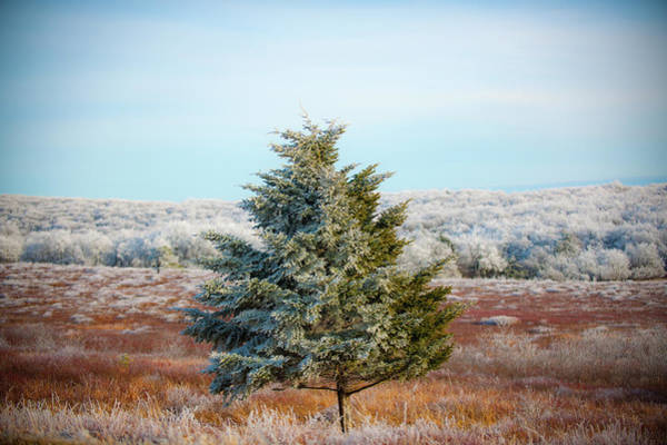 Photograph - Hoarfrost On A Tree by Mark Duehmig
