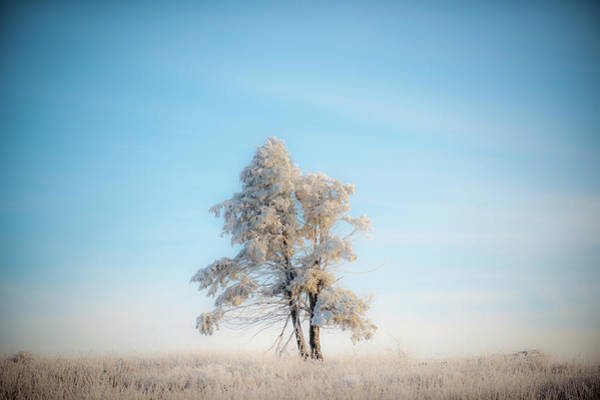 Photograph - Hoarfrost On The Prairie by Mark Duehmig