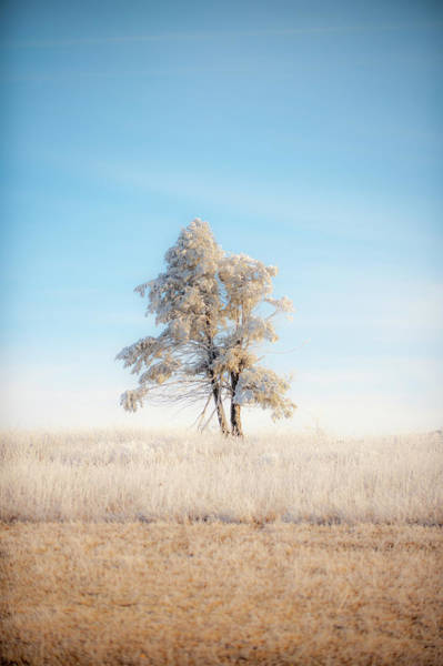 Photograph - Hoarfrost On The Prairie Tree by Mark Duehmig