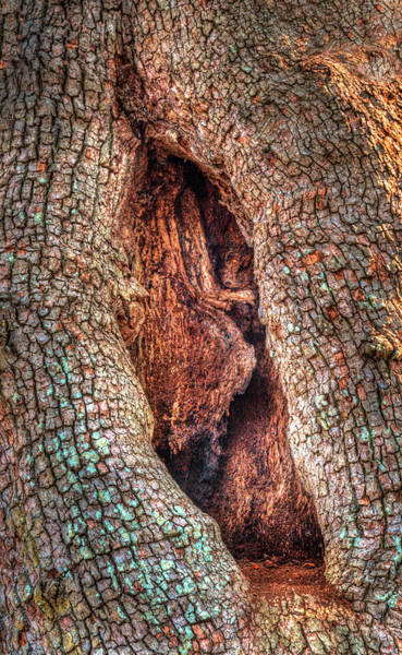 Photograph - Hobbit Hole In The Tree by Gary Slawsky