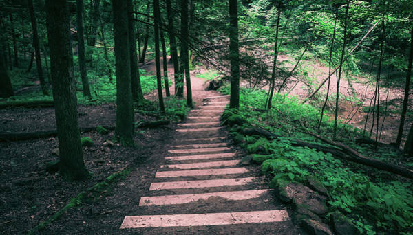 Photograph - Hocking Hills Trail In Summer by Dan Sproul