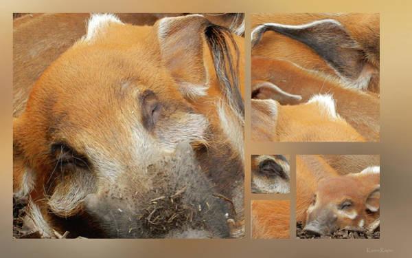 Photograph - Hog Heaven by Karen Rispin
