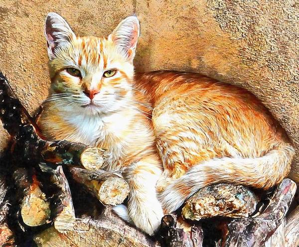 Photograph - Hogarty The Ginger Cat by Dorothy Berry-Lound
