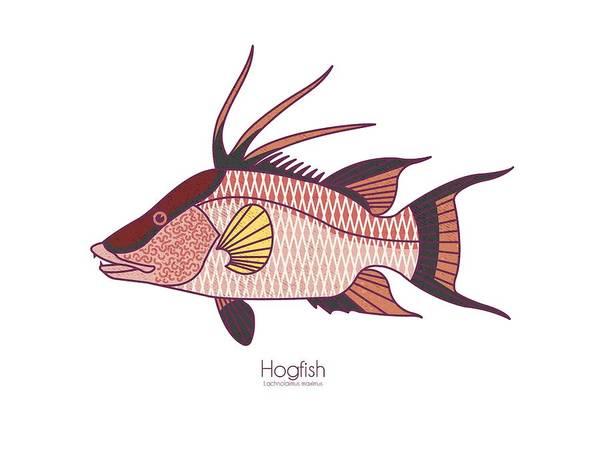Reef Digital Art - Hogfish by Kevin Putman