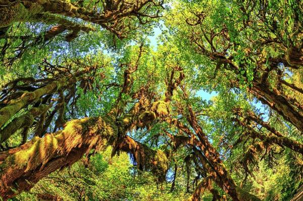Photograph - Hoh Rainforest by Kyle Lee