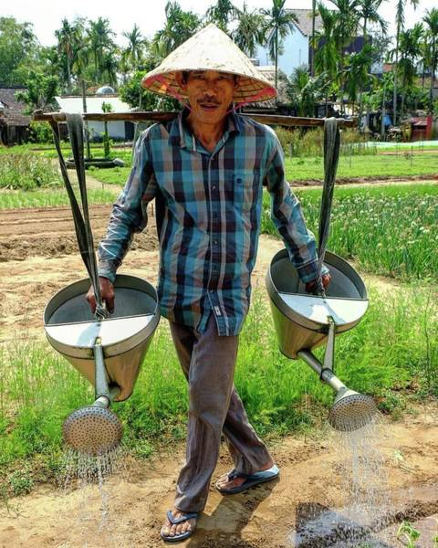 Wall Art - Photograph - Hoi An Organic Farmer, Vietnam by Madeline Ellis