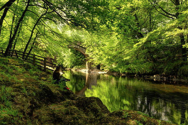 Photograph - Hole Bridge Dartmoor by Maggie McCall