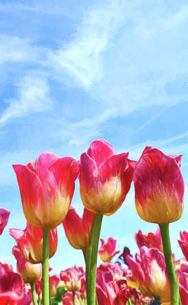 Wall Art - Photograph - Holland Ridge Tulip Farm # 24 by Allen Beatty