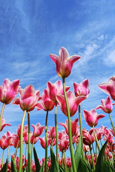 Wall Art - Photograph - Holland Ridge Tulip Farm # 29 by Allen Beatty