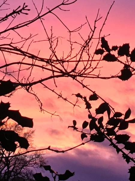 Photograph - Holly Tree Sunset 1 by Itsonlythemoon
