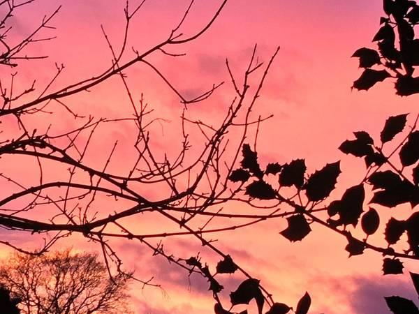 Photograph - Holly Tree Sunset 2 Landscape by Itsonlythemoon