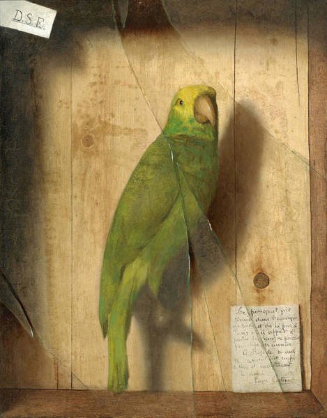 Wall Art - Painting - Homage To A Parrot by De Scott Evans
