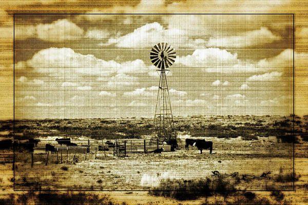 Photograph - Home, Home On The Range by Tikvah's Hope