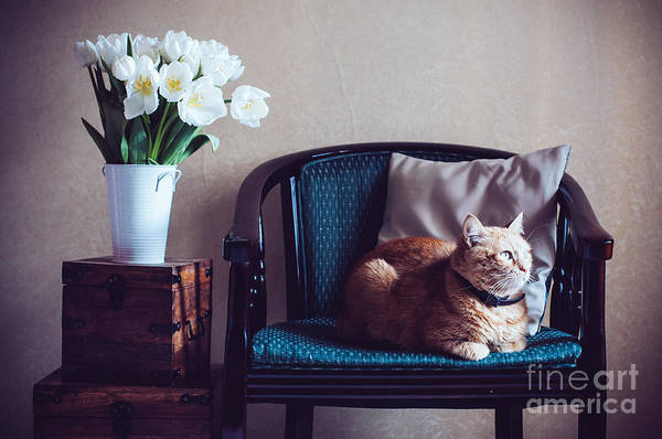 Furniture Wall Art - Photograph - Home Interior, Cat Sitting In An by Daria Minaeva