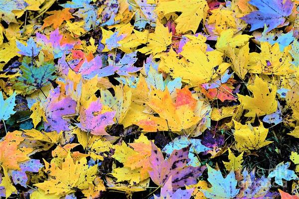 Photograph - Home Leaves by Merle Grenz