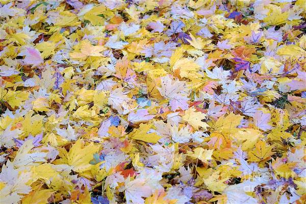Photograph - Home Leaves1 by Merle Grenz