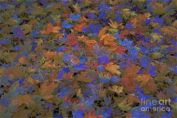 Photograph - Home Leaves4 by Merle Grenz