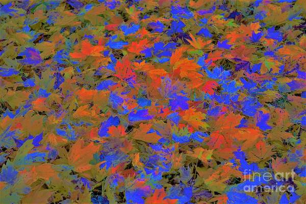 Photograph - Home Leaves5 by Merle Grenz