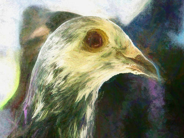 Photograph - Homer Pigeon Up Close Chalk by Don Northup