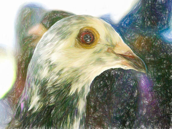 Photograph - Homer Pigeon Up Close Colored Pencil by Don Northup