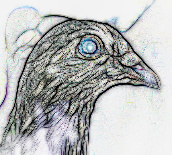 Digital Art - Homer Pigeon Up Close On White by Don Northup