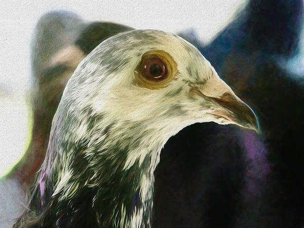 Photograph - Homer Pigeon Up Close Painted by Don Northup