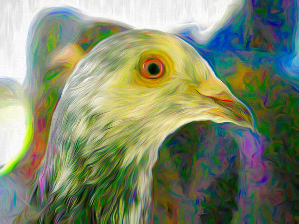 Photograph - Homer Pigeon Up Close Swirly by Don Northup
