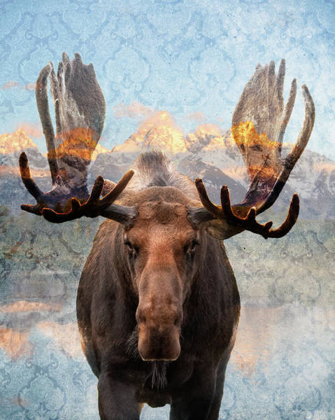Photograph - Hometown Moose by Mary Hone