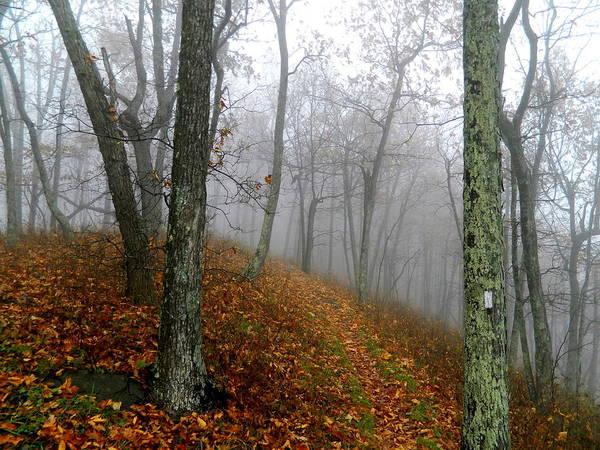 Wall Art - Photograph - Hometown Series - Foggy Woods by Arlane Crump