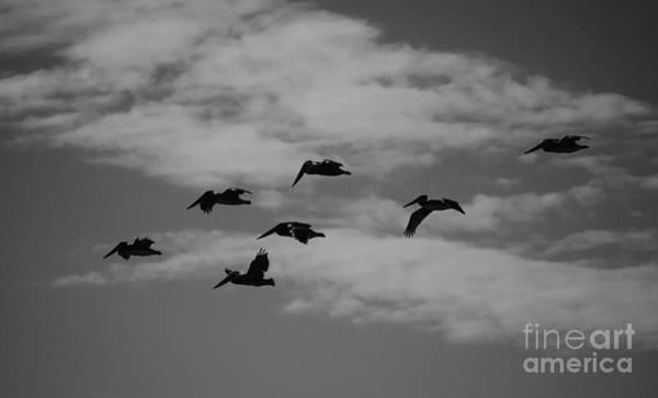 Photograph - Homeward by Jeni Gray