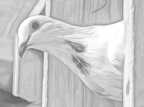 Photograph - Homing Pigeon Black And White Sketch by Don Northup