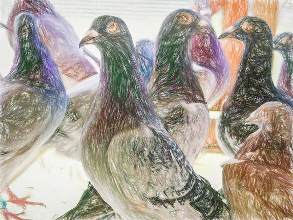 Photograph - Homing Pigeon Group Colored Pencil by Don Northup