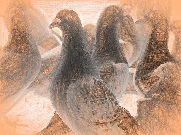 Photograph - Homing Pigeon Group Da Vinci by Don Northup