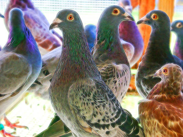 Photograph - Homing Pigeon Group Electric by Don Northup