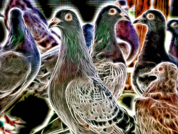 Photograph - Homing Pigeon Group High Voltage by Don Northup