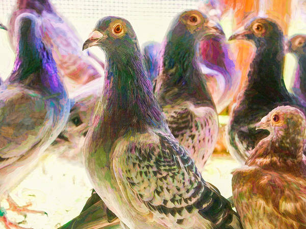 Photograph - Homing Pigeon Group Impasto by Don Northup