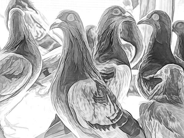 Photograph - Homing Pigeon Group Sketch by Don Northup