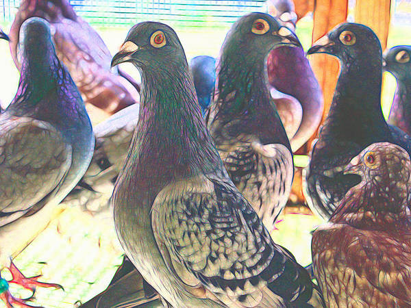 Photograph - Homing Pigeon Group Styled by Don Northup