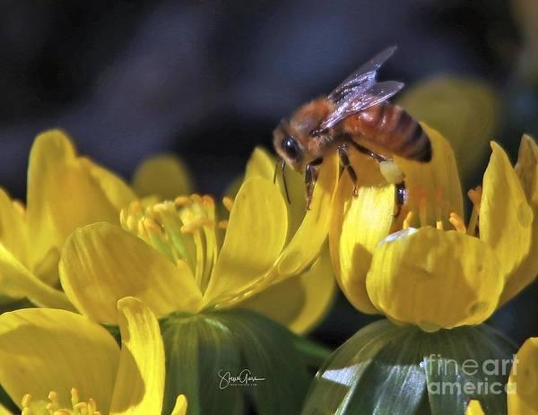 Wall Art - Photograph - Honey Bee 99a by Steve Gass