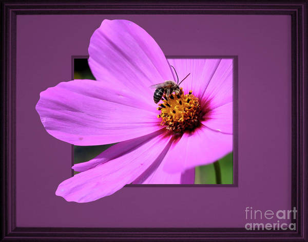 Photograph - Honey Bee On Pink by Smilin Eyes  Treasures