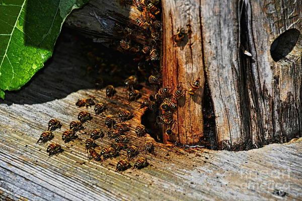Photograph - Honey Bees by Diana Mary Sharpton